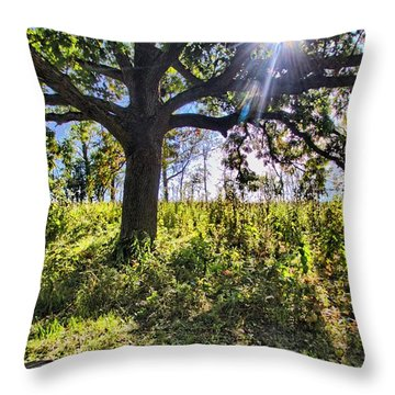 Throw Pillow featuring the photograph The Learning Tree by Daniel Sheldon
