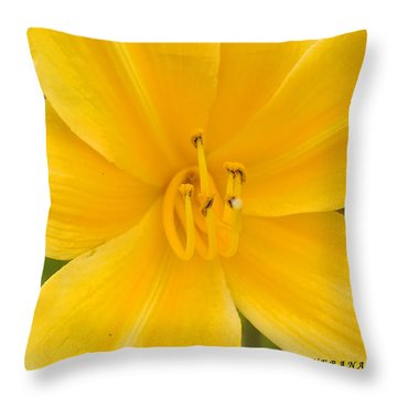 Throw Pillow featuring the photograph The Lily From Kentucky by Verana Stark