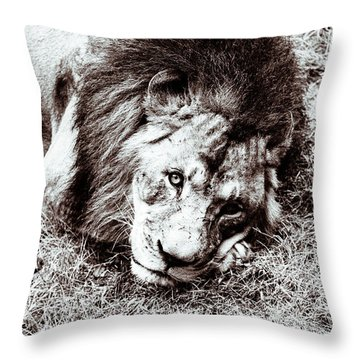 The Lion Sleeps Tonight Throw Pillow by Wade Brooks