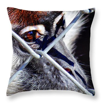 Throw Pillow featuring the photograph The Look Of Despair by Jason Politte