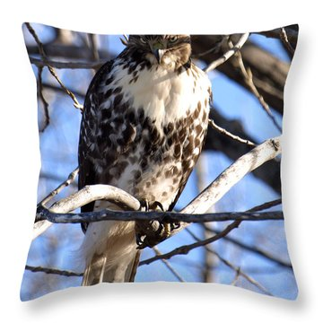The Look Says It All Throw Pillow