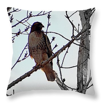 The Majestic Hawk Throw Pillow
