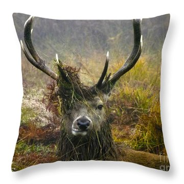 Stag Party The Series The Morning After Throw Pillow