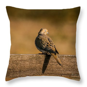 The Morning Dove Throw Pillow by Robert Frederick