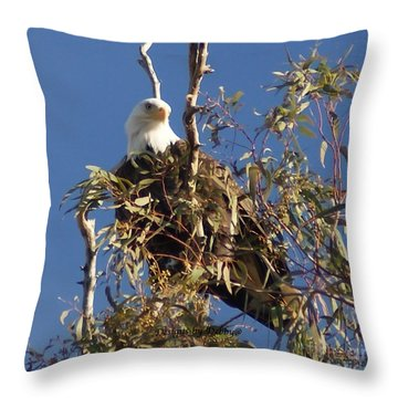 Throw Pillow featuring the photograph The Most Magnificant Bird by Debby Pueschel