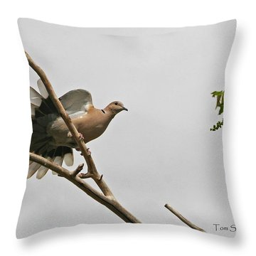 The New Dove In Town Throw Pillow by Tom Janca