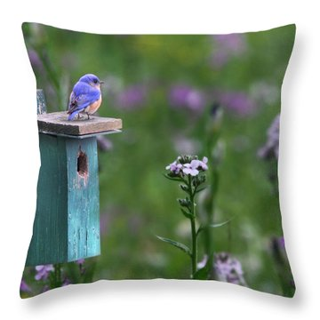 The New Landlord Throw Pillow by Lori Deiter