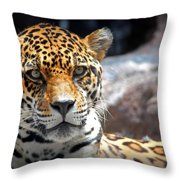 Throw Pillow featuring the photograph The Ole Leopard Don't Change His Spots by Lynn Sprowl