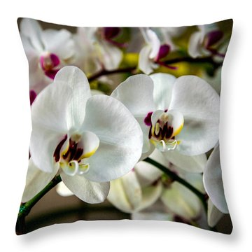 The Orchid Sisters And Backup Singers Throw Pillow by John Haldane