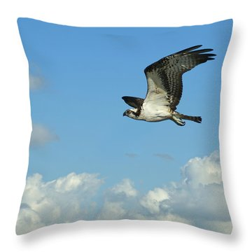 The Osprey 2 Throw Pillow by Ernie Echols