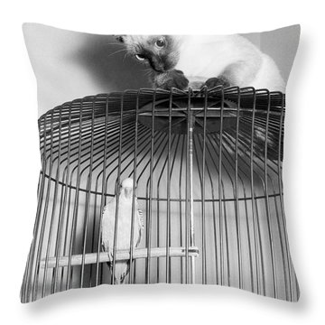 The Parakeet And The Cat Throw Pillow