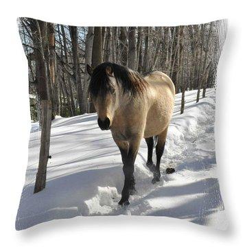 The Paso Fino Stallion Named Brio Throw Pillow by Patricia Keller