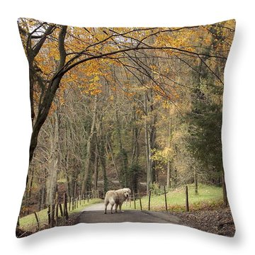 The Pause Throw Pillow by Colleen Williams
