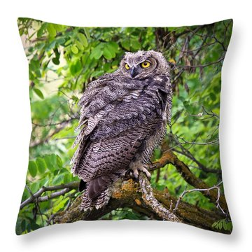 The Perch Throw Pillow by Steve McKinzie