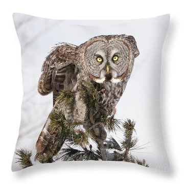 Throw Pillow featuring the photograph The Perching Prince by Heather King