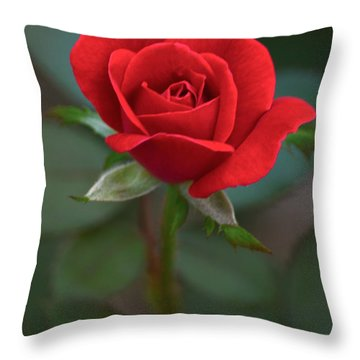 The Perfect Rose Throw Pillow