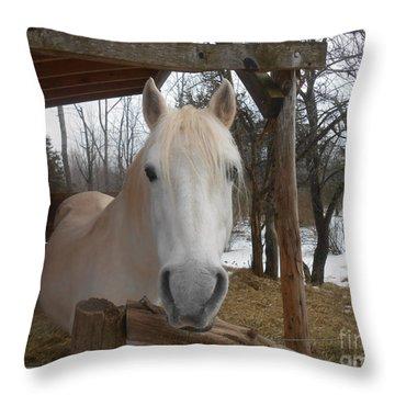 The Picture Perfect Paso Fino Stallion Throw Pillow by Patricia Keller