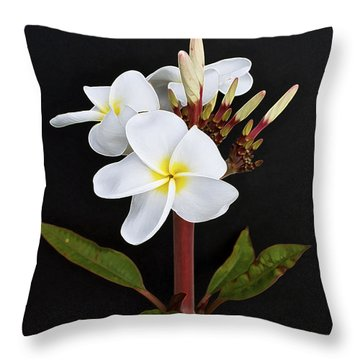 The Plumeria Throw Pillow by Gwyn Newcombe