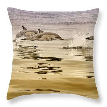 Dolphin Canvas Print, Photographic Print, Art Print, Framed Print, Greeting Card, Iphone Case, Throw Pillow