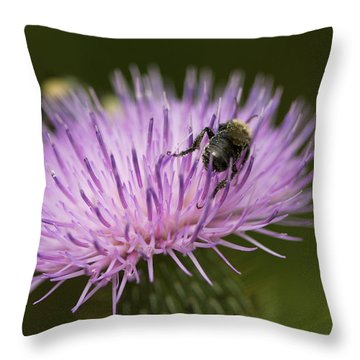 The Pollinator - Bee On Thistle  Throw Pillow by Jane Eleanor Nicholas