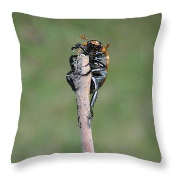 Throw Pillow featuring the photograph The Posing Beetle by Verana Stark