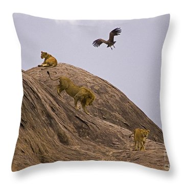 Throw Pillow featuring the photograph The Pride by J L Woody Wooden