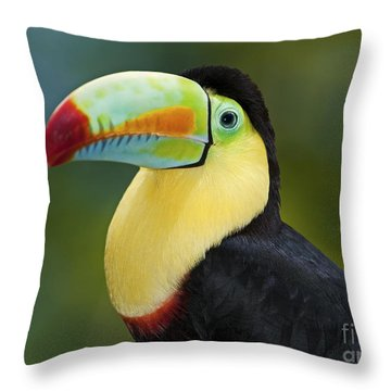 The Rainbow Bird.. Throw Pillow