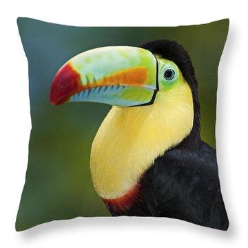 The Rainbow Bird.. Throw Pillow by Nina Stavlund