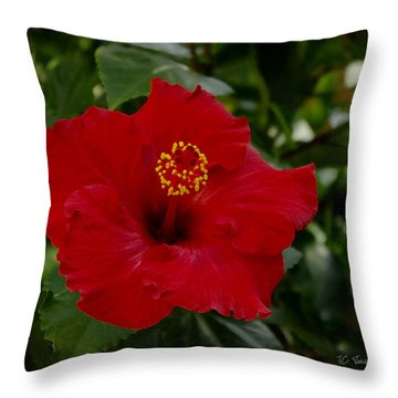Throw Pillow featuring the photograph  Red Hibiscus by James C Thomas