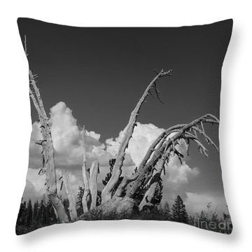Throw Pillow featuring the photograph The Remnant by Terry Garvin