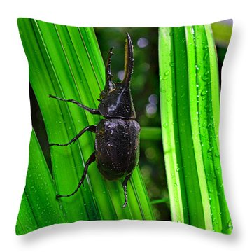 The Rhinoceros Beetle Throw Pillow by Gary Keesler