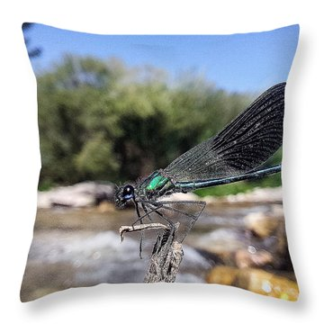 Throw Pillow featuring the photograph The River Dragonfly by Stwayne Keubrick