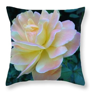 The Rose For A Rose Is A Rose Is A Rose Throw Pillow