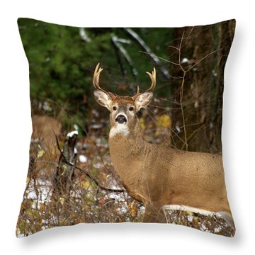 The Rutting Whitetail Buck Throw Pillow
