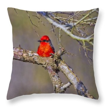 The Scarlet Letter Throw Pillow by Gary Holmes