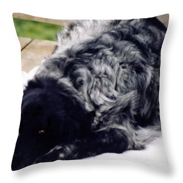 Throw Pillow featuring the photograph The Shaggy Dog Named Shaddy by Marian Cates