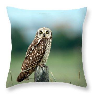 The Short-eared Owl  Throw Pillow