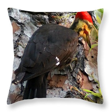 The Southeastern Pileated Woodpecker Throw Pillow by Kim Pate