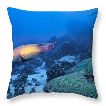 The Spanish Hog Snapper Throw Pillow