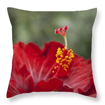 The Star Of Dawn Throw Pillow by Sharon Mau