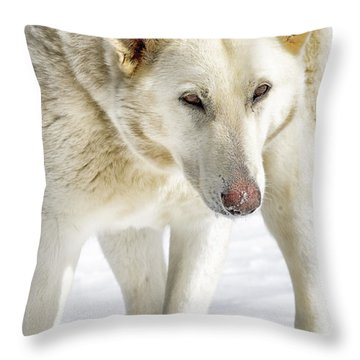 The Stare Throw Pillow by Thomas R Fletcher