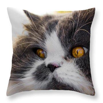 The Watching Cat Throw Pillow by Daniel Precht