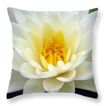 Throw Pillow featuring the photograph The Water Lilies Collection - 03 by Pamela Critchlow