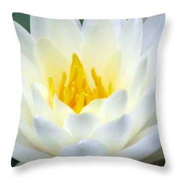 Throw Pillow featuring the photograph The Water Lilies Collection - 05 by Pamela Critchlow