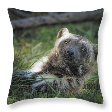The Wolverine Skunk Bear Happy Face Throw Pillow by LeeAnn McLaneGoetz McLaneGoetzStudioLLCcom