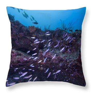 The World Of Purple Throw Pillow