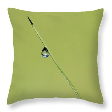 Throw Pillow featuring the photograph The World Within A Dewdrop by Penny Meyers