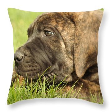 There Is Nothing Better Than A Bone And Some Warm Grass Throw Pillow by Jeff Swan