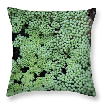 Throw Pillow featuring the photograph They Say by John Glass