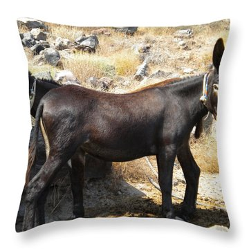 Throw Pillow featuring the photograph Thirasia  Donkeys Santorini Greece by Colette V Hera  Guggenheim